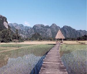 Laos rizières campagne