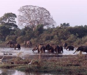Les éléphants au Laos
