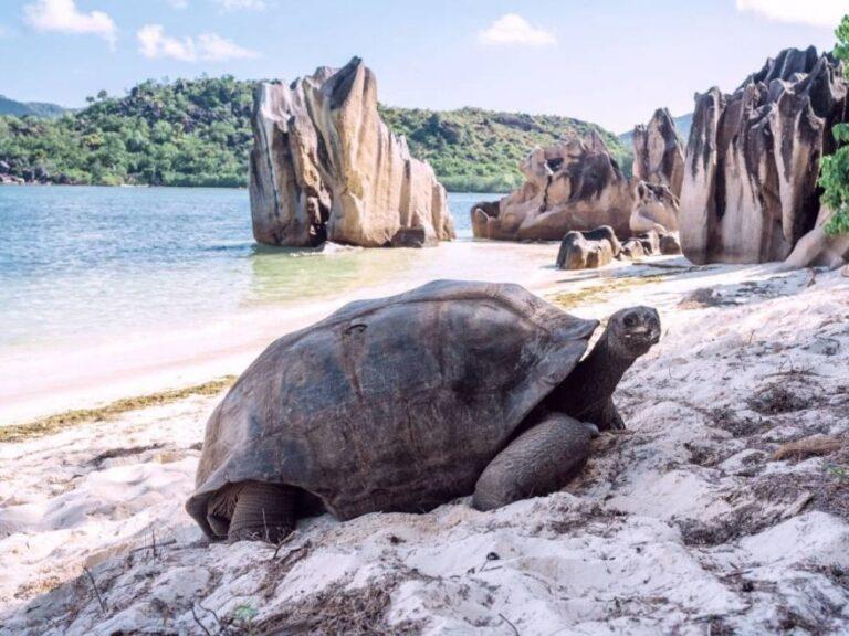 Tortue île Curieuse aux Seychelles