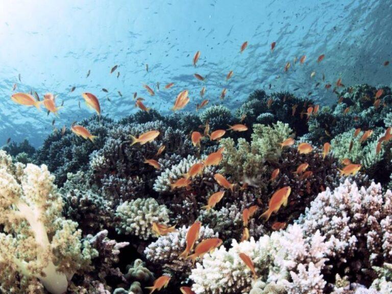 plongée sous marine à Mahé