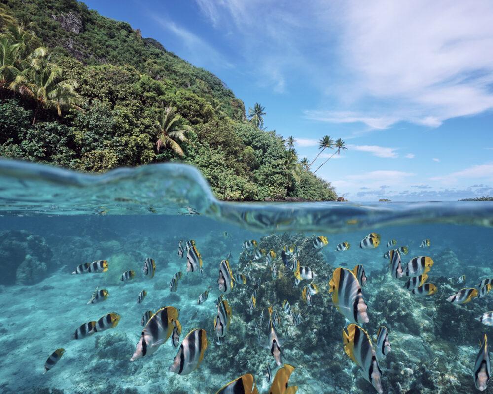 Polynésie française au paradis