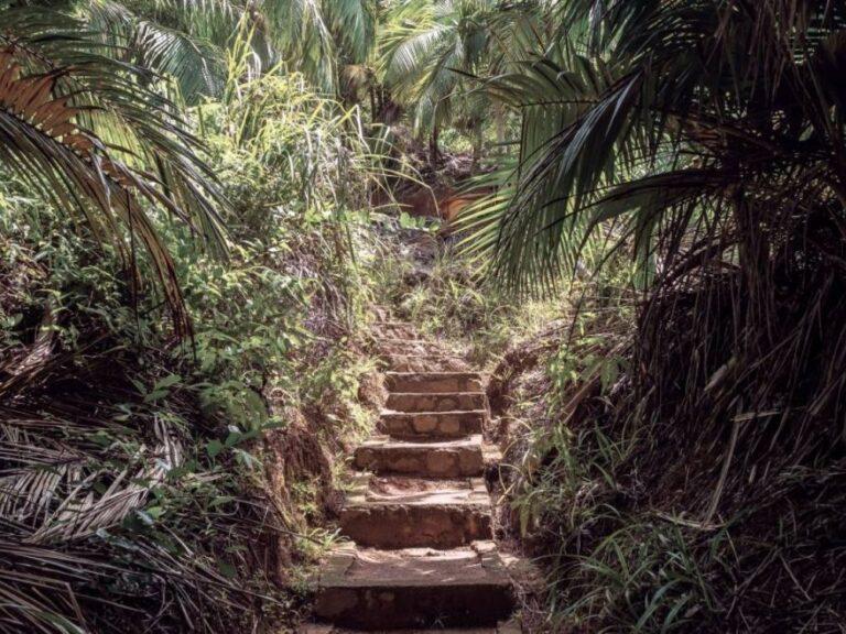 Vallée de Mai sur l'île de Praslin