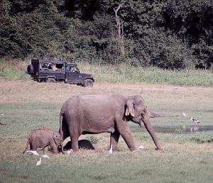 Sir Lanka safari éléphant en 4x4
